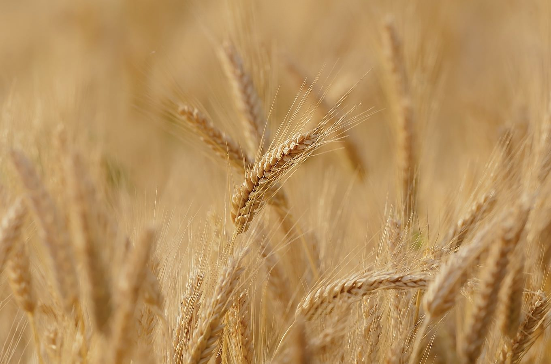 小麦の柔らかな香ばしさ